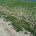 Pole a lesy v okolí Brna